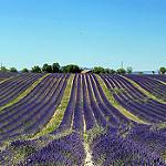 Lavander Art @ Valensole par Jean et Coco - Valensole 04210 Alpes-de-Haute-Provence Provence France