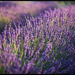 Respirez... par  - St. Jeannet 06640 Alpes-de-Haute-Provence Provence France