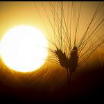 Soleil couchant sur les blés par Michel-Delli - St. Jeannet 06640 Alpes-de-Haute-Provence Provence France