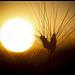 Soleil couchant sur les blés by Michel-Delli - St. Jeannet 06640 Alpes-de-Haute-Provence Provence France