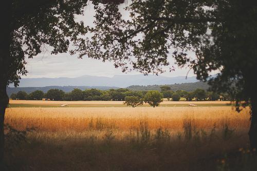 Champs de blé  par Dri.Castro