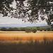 Champs de blé  by Dri.Castro - St. Laurent du Verdon 04500 Alpes-de-Haute-Provence Provence France
