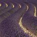 Serpentins de lavandes - Couleurs et graphisme au naturel par bobpado - Valensole 04210 Alpes-de-Haute-Provence Provence France