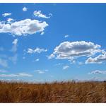 Ciel de Valensole et champs de blé par Manuel.A.69 - Valensole 04210 Alpes-de-Haute-Provence Provence France