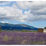 Le plateau de Valensole et sa lavande by Manuel.A.69 - Valensole 04210 Alpes-de-Haute-Provence Provence France