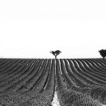 Geometry - Lines and silhouettes in Valensole - France by  - Valensole 04210 Alpes-de-Haute-Provence Provence France