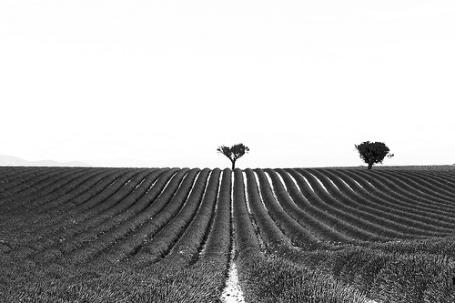 Geometry - Lines and silhouettes in Valensole - France par Ludo_M