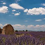 Les lavandes me parlent par Christian8340225 - Valensole 04210 Alpes-de-Haute-Provence Provence France