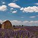 Les lavandes me parlent by Christian8340225 - Valensole 04210 Alpes-de-Haute-Provence Provence France