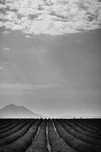 Plateau de Valensole en noir et blanc par Stéphan Wierzejewski