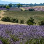 Rolling Fields of Lavender by Jonathan Sharpe, Photographer - Valensole 04210 Alpes-de-Haute-Provence Provence France