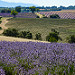 Rolling Fields of Lavender par Jonathan Sharpe, Photographer - Valensole 04210 Alpes-de-Haute-Provence Provence France