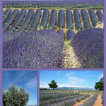 Plateau de Valensole by Margotte apprentie naturaliste 2 - Valensole 04210 Alpes-de-Haute-Provence Provence France