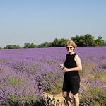 Souvenir dans les Lavandes by csibon43 - Valensole 04210 Alpes-de-Haute-Provence Provence France