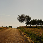 Summer Road in Provence by MartaF. - Valensole 04210 Alpes-de-Haute-Provence Provence France