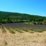 Champ de lavande sur le plateau de Valensole par nic( o ) - Valensole 04210 Alpes-de-Haute-Provence Provence France