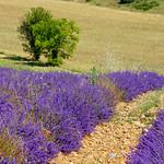 Valensole - la magie des lavandes par Bruno JOURET - Valensole 04210 Alpes-de-Haute-Provence Provence France