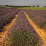 Valensole - le paradis de la lavande par Patrizia1966 - Valensole 04210 Alpes-de-Haute-Provence Provence France