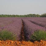 Marée de lavande à Valensole par Patrizia1966 - Valensole 04210 Alpes-de-Haute-Provence Provence France