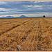 Après la moisson  par Charlottess - Valensole 04210 Alpes-de-Haute-Provence Provence France