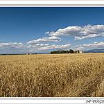 Plateau de Valensole et ses champs de blé par PUIGSERVER JEAN PIERRE - Valensole 04210 Alpes-de-Haute-Provence Provence France