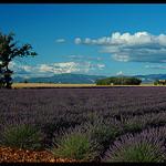 Champs de lavandes à Valensole par Patchok34 - Valensole 04210 Alpes-de-Haute-Provence Provence France