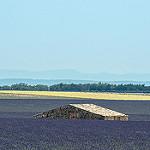La mer de lavande - Plateau de Valensole par  -   Alpes-de-Haute-Provence Provence France
