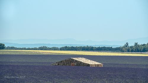 La mer de lavande - Plateau de Valensole par moni-h
