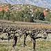 Vigne au pied de la Montagen Sainte-Victoire par Alpha Lima X-ray - Aix-en-Provence 13100 Bouches-du-Rhône Provence France