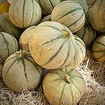 Melons de provence by Bitxuverinosa - Aix-en-Provence 13100 Bouches-du-Rhône Provence France