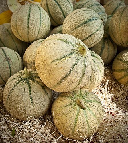Melons de provence par Bitxuverinosa