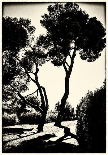 Chez Paul Cézanne en mode graphique by pierre.arnoldi