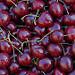 Cerises sur les marchés de provence par Gilles Poyet photographies - Arles 13200 Bouches-du-Rhône Provence France