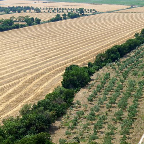 Vue sur la plaine autour de Montmajour par dmirabeau