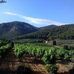 Vignes et oliviers au milieu des pins. Domaine la Michelle par Gé Cau - Auriol 13390 Bouches-du-Rhône Provence France