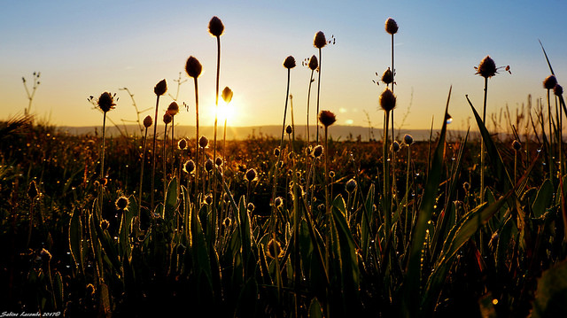 Hello Sunshine ... (Bouches-du-Rhône - Berre l'Etang) par sabinelacombe