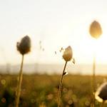 Hello Sunshine ... par sabinelacombe - Berre l'Etang 13130 Bouches-du-Rhône Provence France