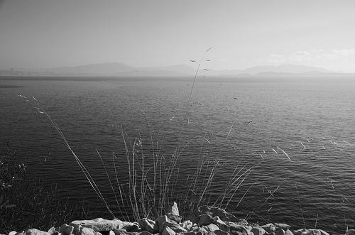 Herbes. Sentier du littoral de Niolon par Julien Desclaux