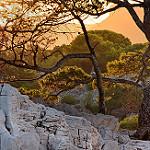 Roche, arbres... heure dorée dans les calanques par Charlottess - Cassis 13260 Bouches-du-Rhône Provence France