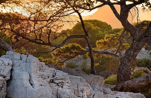 Roche, arbres... heure dorée dans les calanques par Charlottess