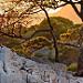 Roche, arbres... heure dorée dans les calanques by Charlottess - Cassis 13260 Bouches-du-Rhône Provence France