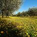 Le printemps est inexorable (P. Neruda) par Boccalupo - Eygalieres 13810 Bouches-du-Rhône Provence France