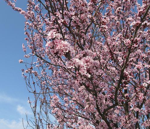 Fleurs et parfum... l'arrivée du printemps par cigale4