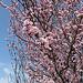 Fleurs et parfum... l'arrivée du printemps par Vaxjo - Fontvieille 13990 Bouches-du-Rhône Provence France