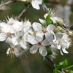 le printemps est bien là ... by cigale4 - Fontvieille 13990 Bouches-du-Rhône Provence France