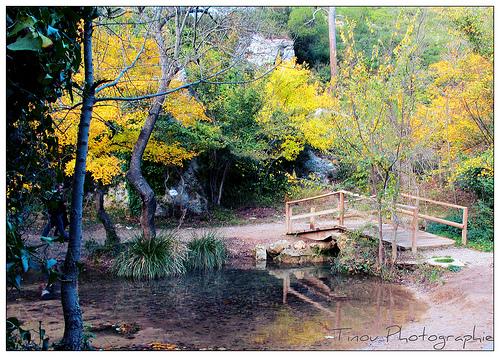 Dans la Forêt de Saint-Pons by Tinou61