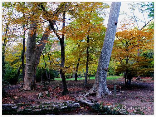 Randonnée dans la forêt de Saint Pons by Tinou61