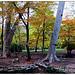 Randonnée dans la forêt de Saint Pons by Tinou61 - Gémenos 13420 Bouches-du-Rhône Provence France