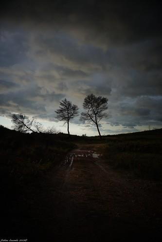 Debouts... les arbres ! par Sabine LACOMBE