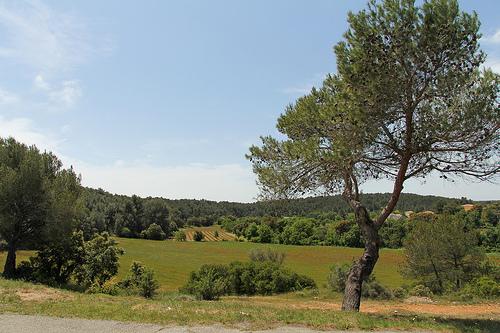 Paysage autour de Lambesc (Nationale 7) by Meteorry